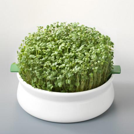 Coupelle de germination