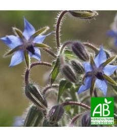Fleurs de bourrache bio