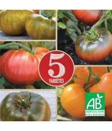 Mélange de tomates à gros fruits