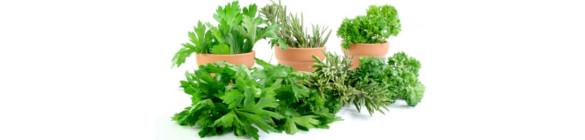 Graines bio de plantes aromatiques et médicinales